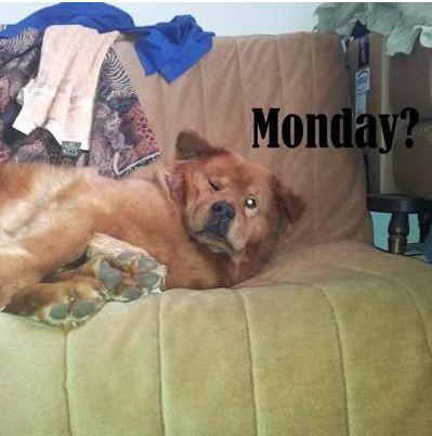 MondayMeme